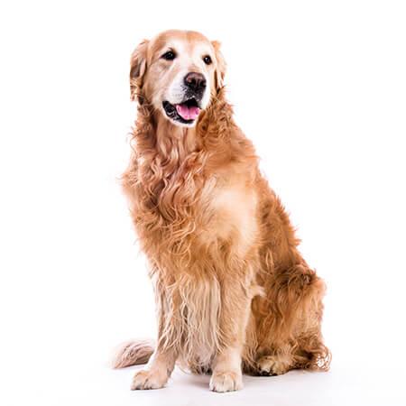 stress-free pet care